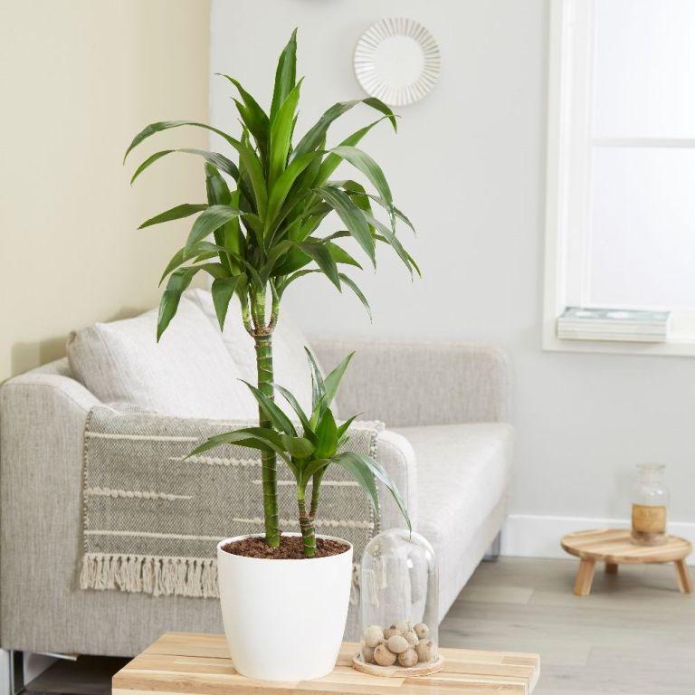 بهترین گیاهان عاشق سایه